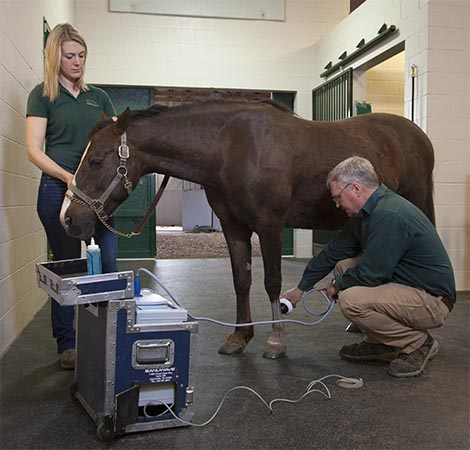 Dr. Zeliff treating an equine patient. | equine lameness