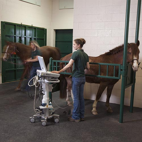 Equine Medicine practiced