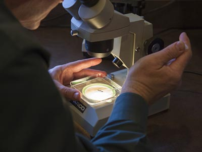 Looking through a microscope | Equine Reproduction