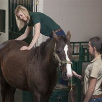 Dr. Brown giving chiropractic care to an equine patient.