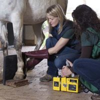 An equine patient being prepped for an Imaging scan.