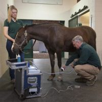 Dr. Zeliff treating an equine patient.